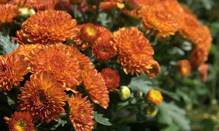 Cannor Nursery - Victoria: Plants and Nursery Items or Christmas Trees at Cannor Nursery (Half Off)