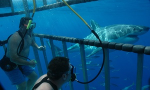 Islander Charters: Five-Day Great White Shark Cage Dive Trip for One or Two from Islander Charters (Up to 40% Off)