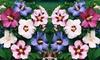Pianta Hibiscus tricolore