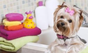 Animo Zen Toilettage: Découverte bain et brushing, option toilettage complet pour chien et chat dès 12,50 € chez Animo Zen Toilettage