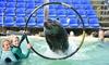 Zwemmen met zeeleeuwen in Zeeland