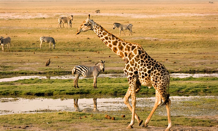 Zootastic Park - Troutman: $399 for a One-Hour Giraffe Safari Encounter for Up to Six at Zootastic Park ($800 Value)
