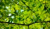Pixies Gardens - Conyers: $25 for $50 Worth of Plants and Trees at Pixies Gardens
