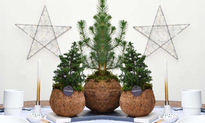 Kerstboom In Pot.Tot 61 Op Kerstboom Met Pot Groupon Producten
