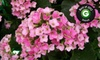 English Gardens - Multiple Locations: $10 for $20 Worth of Plants, Flowers, and Gardening Supplies at English Gardens