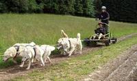 Baptême en Cani-kart avec chiens de traîneau dès 95 € avec La Meute Scoobeedoo