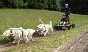 La Meute ScooBeeDoo: Baptême en Cani-kart avec chiens de traîneau dès 95 € avec La Meute Scoobeedoo