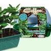 Sprout 'n Grow Coffee Bean Greenhouse