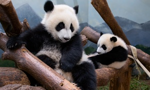 Up to 47% Off Admission to Zoo Atlanta at Zoo Atlanta, plus 6.0% Cash Back from Ebates.
