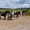 One-Hour Pony Trekking for One