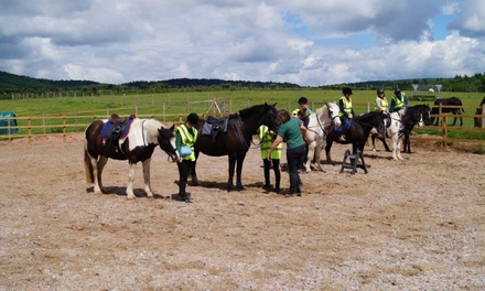 One-Hour Pony Trekking for One or Two at SevernwyeEquestrian (20% Off)