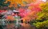 Set di 4 o 8 piante di Aceri Giapponesi