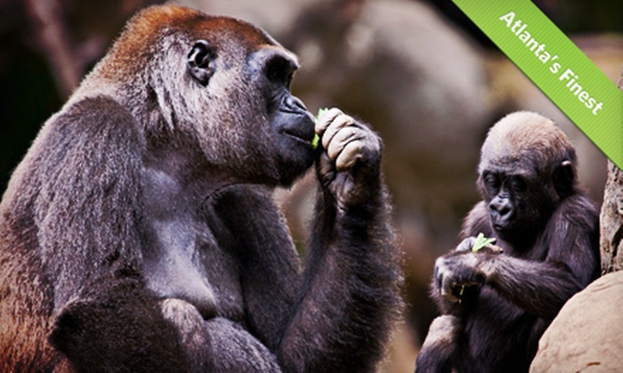 Zoo Atlanta - Eastside: $20 for a Visit to Zoo Atlanta for Two (Up to $41.98 Value)