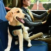 Pet Carseat Covers