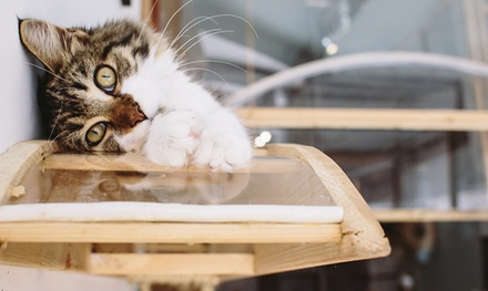 Pause Cat Cafe Entry with Main Course, Dessert and Drink for One, Two or Four (Up to 44% Off)