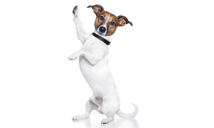 Elevation Dog Training and Pet Care: $30 for $60 Worth of Services — Elevation Dog Training and Pet Care