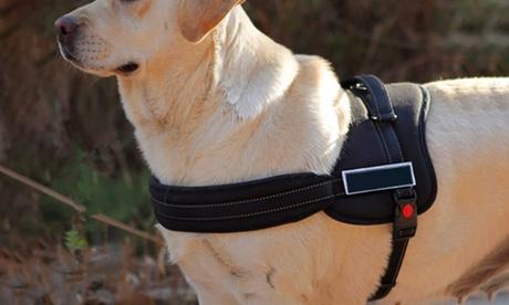 Arnés de adiestramiento canino Oferta en Groupon