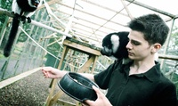 Serval, Lemur and Meerkat Experience for Two at Wills Wild Animal Encounters (68% Off)