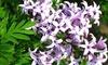 Syringa Plants Collection