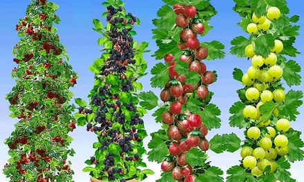 Four Pillar Fruit Collection for £29.99 With Free Delivery