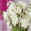 Amaryllis and Paperwhite Indoor Garden (13 Bulbs)