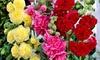 3 o 6 piante di Alcea Rosea