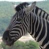 Entrada al parque Safari Aitana