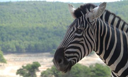 Entrada al parque Safari Aitana para 1 o 2 adultos con 1 o 2 niños desde22 €