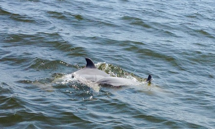 Up to 42% Off Dolphin Watch Tours at Dolphin Tales