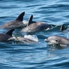 Up to 50%Off Whale- and Dolphin-Watching Cruise