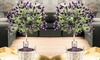 Lavendel-Stamm