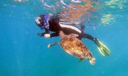 Tour guiado de snorkel para 2, 4, 6 u 8 personas desde 24,95 € en Diving Atlantis