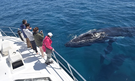Augusta Whale Watching Cruise for One ($62) or Two Adults ($124) with All Sea Charters (Up to $170 Value)