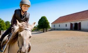 OFFICINA EQUESTRE: 3 o 5 lezioni di equitazione di 60 minuti per una o 2 persone da Officina Equestre (sconto fino a 73%)