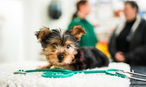 Maypole Vets: Cat or Dog Castration or Spay at Maypole Vets (Up to 50% Off)