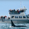 Half Off Whale-Watching Tour from Five Star