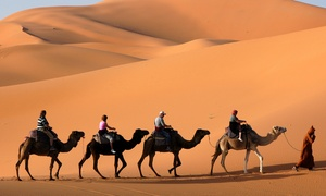 Red Dunes Tourism llc: Six-Hour Dubai VIP Safari with Private Pick up for One, Two or Six with Red Dunes Tourism