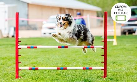 4, 8 ou 18 aulas de adestramento, comportamento ou obediência de cães com o Sergio Adestrador