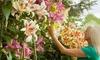 Groupon Goods Global GmbH: 9x oder 18x Tree-Lily in 3 Sorten, geliefert als Blumenzwiebeln