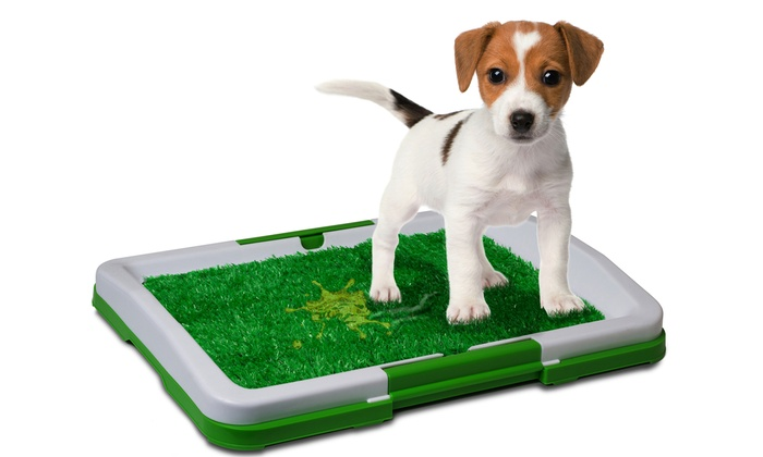 Up To 73% Off on Dog Potty Trainer Grass Pee Pad | Groupon Goods