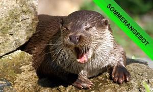 Otter Zentrum: Eintritt für 2 Erwachsene oder Familienkarte für das Otter Zentrum (bis zu 33% sparen*)