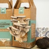 Two Back to the Roots Mushroom-Growing Kits