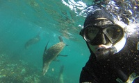 Snorkeling with Seals from R299 for One with Cape Town Bucketlist (Up to 56% Off)