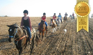 חוות דובי: רכיבת סוסים באזור רמות מנשה היפהפה! רק 99 ₪ לטיול רכיבה בן שעה עם הדרכה + פינת קפה וכיבוד קל. תקף 7 ימים בשבוע וגם בחגים