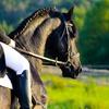 5 o 7 lezioni di equitazione a Vighignolo