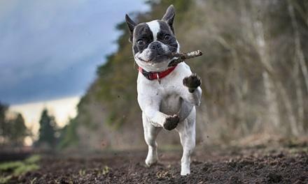 Curso online de 80 horas de formación en primeros auxilios aplicados a perros con Grupo Menta Siglo XXI