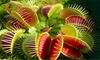 Two or Four Carnivorous Plants