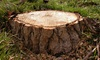 Stump Grinding Reasonable Pricing: Stump Grinding for a Tree Up to 20 Inches in Diameter from Stump Grinding Reasonable Pricing (Up to 50% Off)