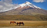 8-Day Tour of Ecuador with Airfare