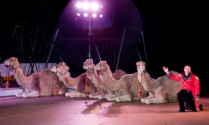 Garden Bros Circus In Reading Pa Groupon